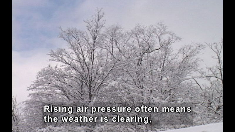Snow covered trees with bare branches. Caption: Rising air pressure often means the weather is clearing,