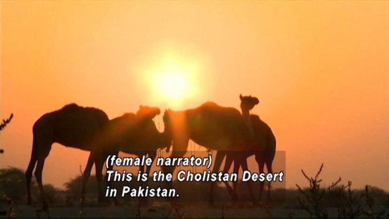 Still image from: Pakistan: Children of the Desert