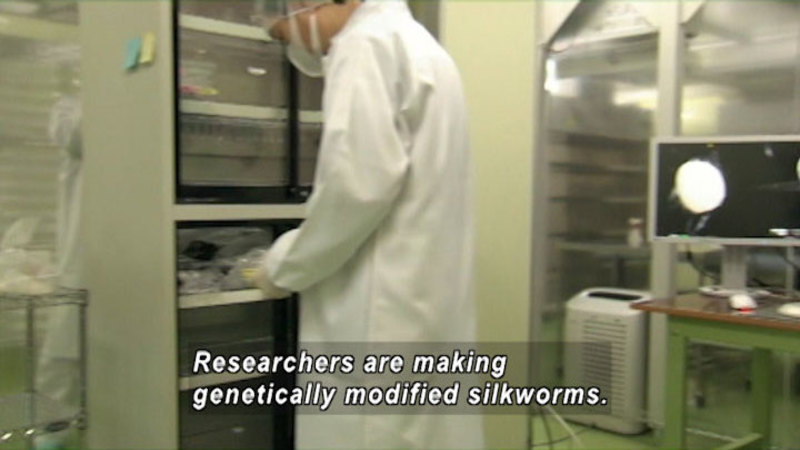 Person in a white coat working in a science lab. Caption: Researchers are making genetically modified silkworms.