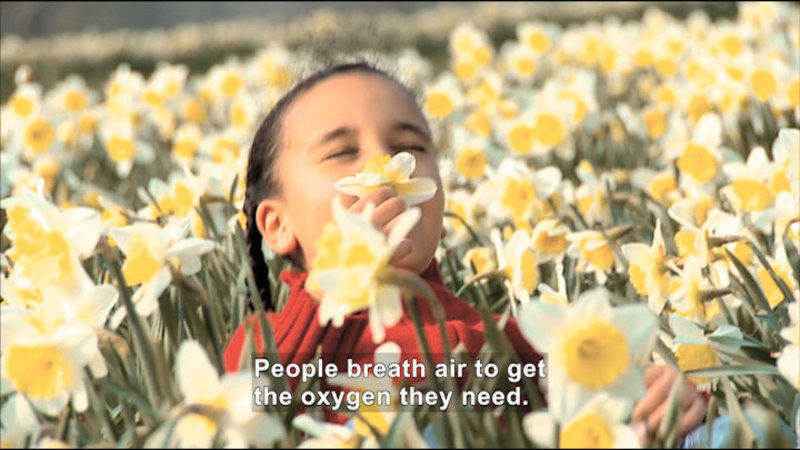 Child in a field smelling flowers. Caption: People breath air to get the oxygen they need.