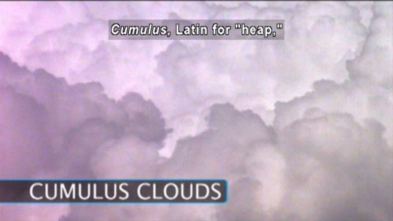 """Puffy white clouds. Cumulus clouds. Caption: Cumulus, Latin for """"heap,"""""""