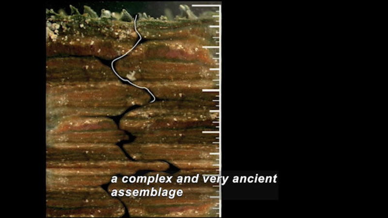 Cross section of earth. Different layers of rock and soil have a jagged crack running down them. Caption: a complex and very ancient assemblage