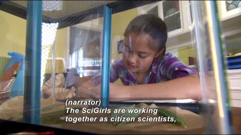 Young girl in front of an aquarium. Caption: (narrator) The SciGirls are working together as citizen scientists,