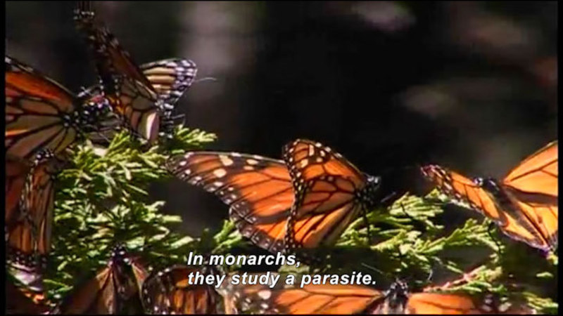 Still image from Science Nation: Butterflies and Bats Reveal Clues About Spread of Infectious Disease