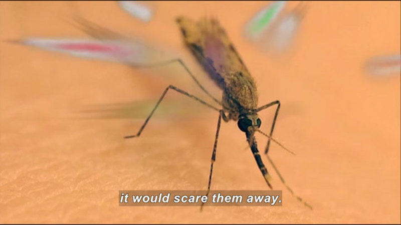 Still image from Science Nation: New Mosquito Repellant Could Be Frightening...for the Mosquitoes!
