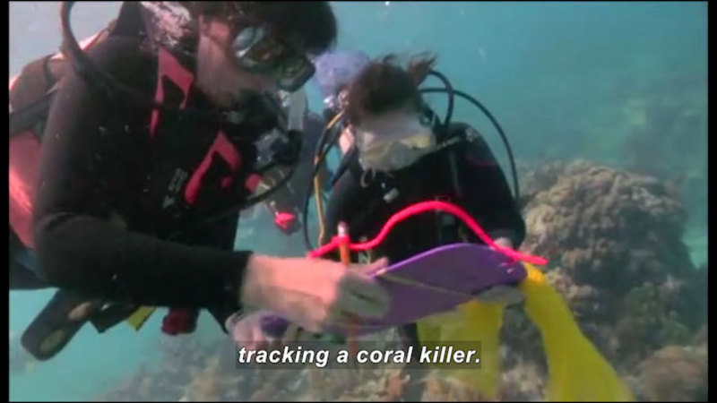 Still image from Science Nation: Catching a Coral Killer