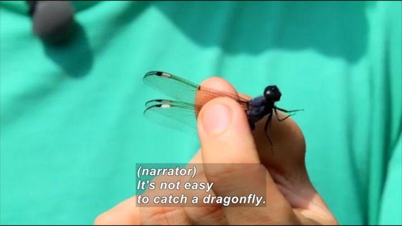 Still image from Science Nations: Dragonflies--The Flying Aces of the Insect World