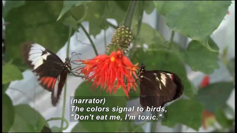 Still image from Science Nation: Evolution in Action