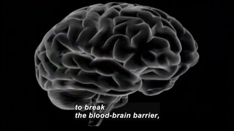 3D diagram of the human brain. Caption: to break blood-brain barrier,