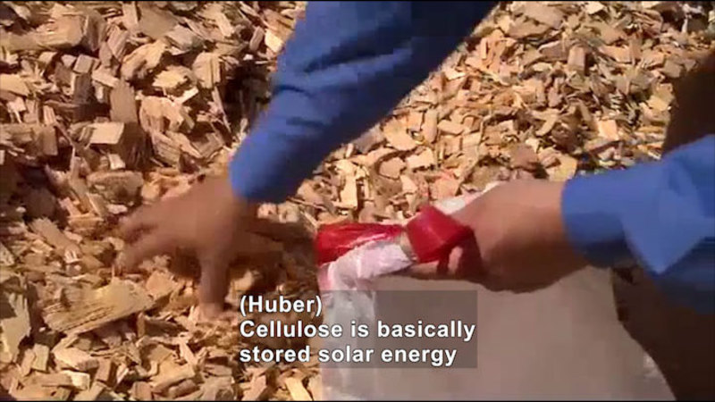 Person picking up wood chips and putting them into a plastic bag. Caption: (Huber) Cellulose is basically stored solar energy