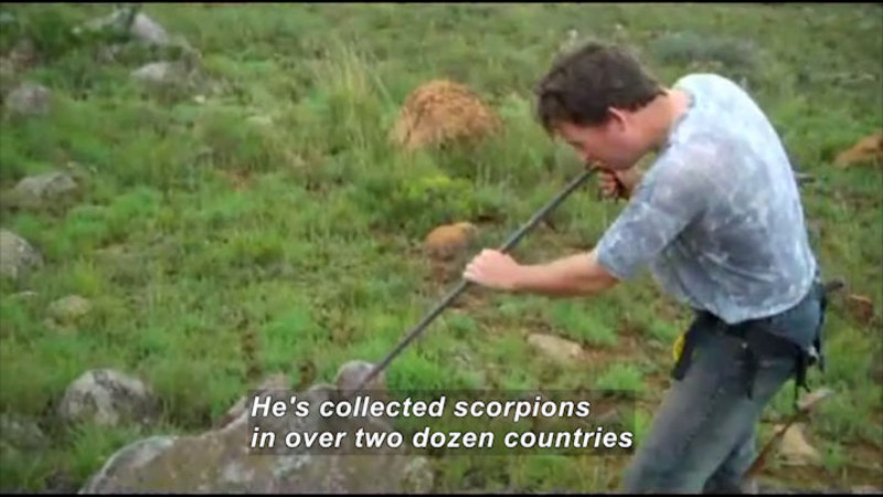 A man with a pole collecting something off a large rock on the ground. Caption: He's collected scorpions in over two dozen countries