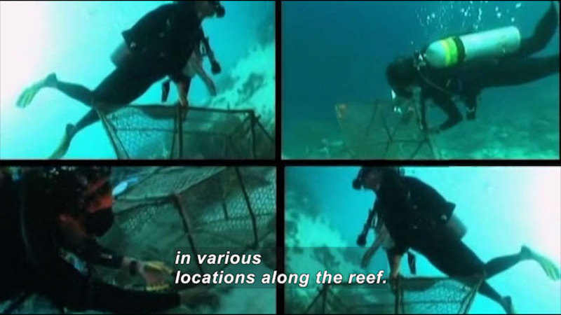Still image from Profiles Of Scientists And Engineers: Marine Biologist