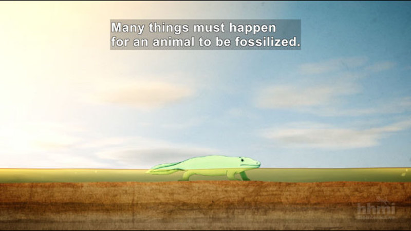 Still image from Great Transitions: The Origin Of Tetrapods