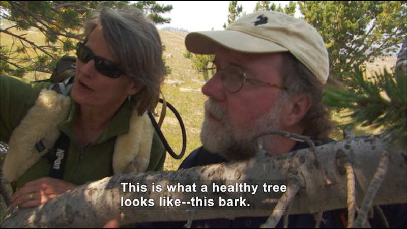 Still image from Liz Hadly Tracks The Impact Of Climate Change In Yellowstone