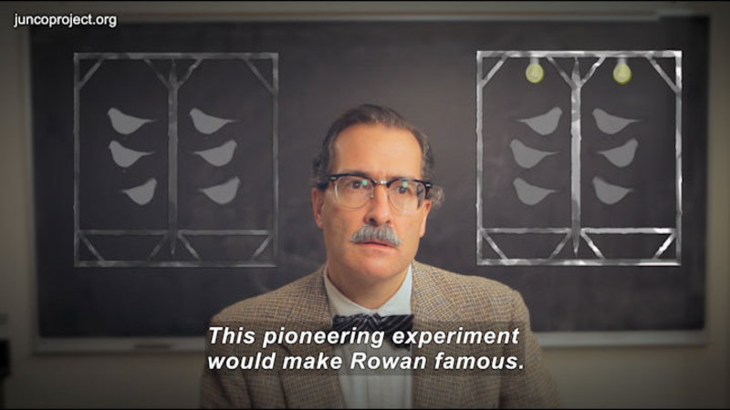 Still image from Pioneers In Science: Rowan And The Junco
