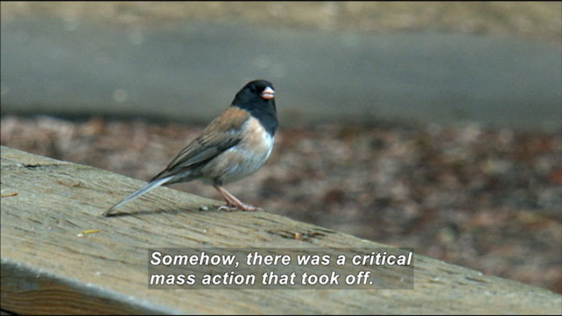 A small bird perched on a plank. Caption: Somehow, there was a critical mass action that took off.