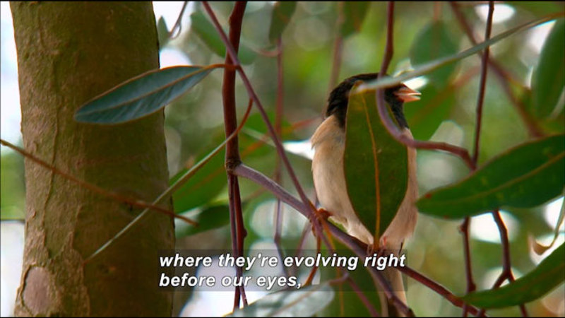 Still image from What We Can Learn From The Junco