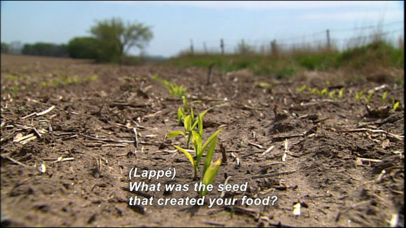 Closeup of rows of seedlings planted in a field. Caption: (Lappé) What was the seed that created your food?