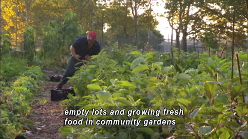 Still image from Bryant Terry: Urban Farms