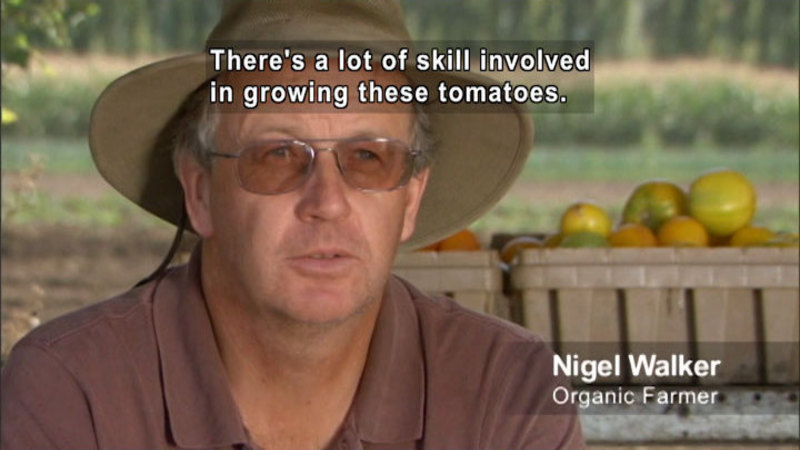 Person speaking. Baskets of tomatoes in the background. Nigel Walker - Organic farmer. Caption: There's a lot of skill involved in growing these tomatoes.