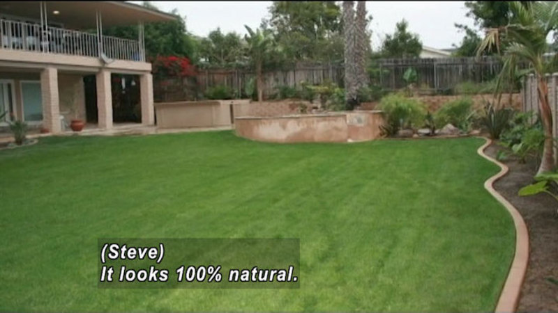 A carpet of green grass in a backyard with palm trees. Caption: (Steve) It looks 100% natural.