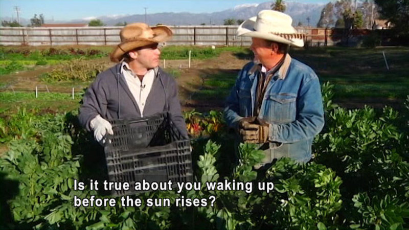 Two men surrounded by plants. Both wear gloves and cowboy hats, one holds a plastic crate. Caption: Is it true about you waking up before the sun rises?