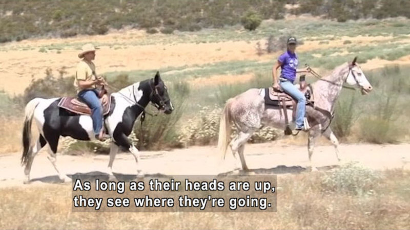 Still image from: Curiosity Quest: Horseback Riding