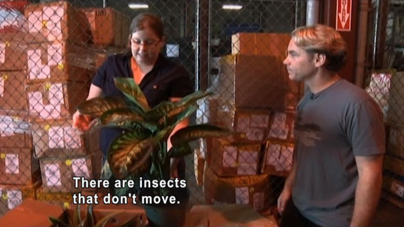 Two people with a box full of plants in pots. One plant is removed, and the woman is touching a leaf. Caption: There are insects that don't move.