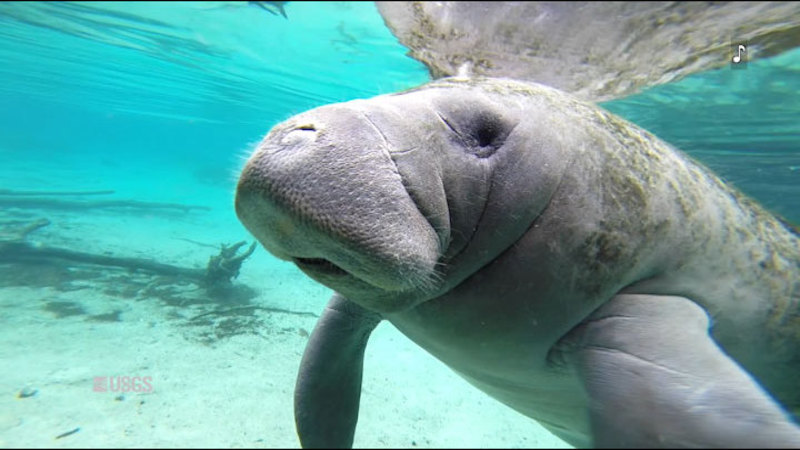 Still image from Magical Manatees