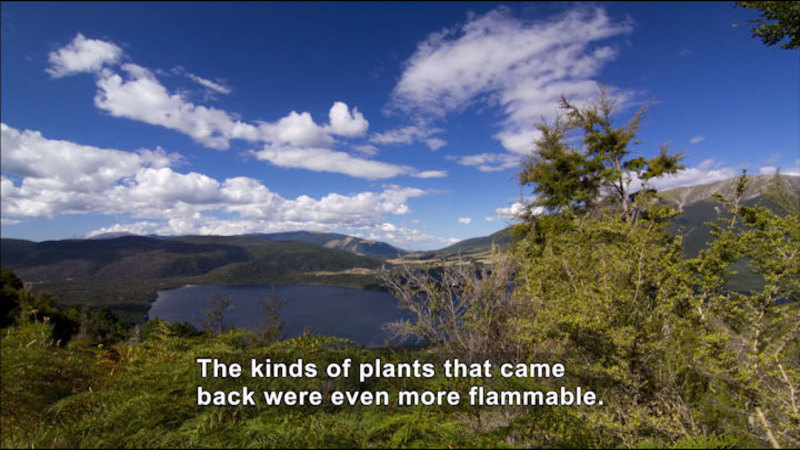 Green foliage in foreground overlooking basin with a lake surrounded by tree covered hills. Caption: The kinds of plants that came back were even more flammable.
