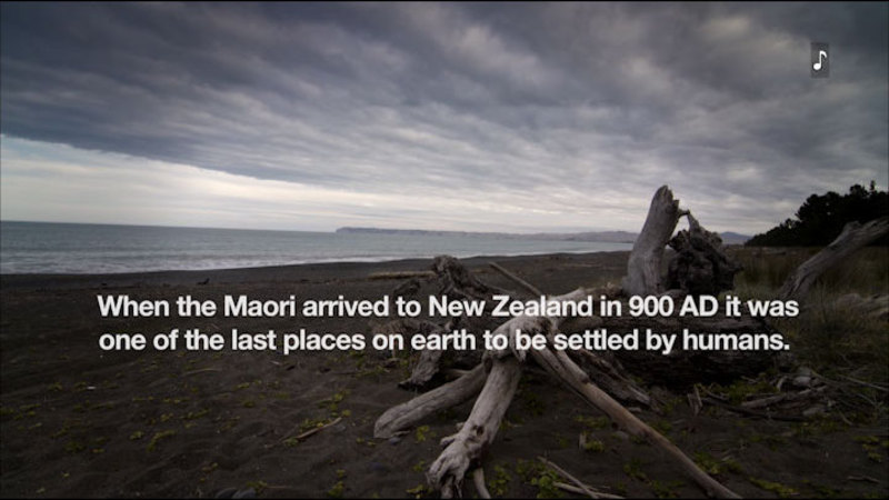Empty sand beach. Caption: When the Maori arrived to New Zealand in 900 AD it was one of the last places on earth to be settled by humans.
