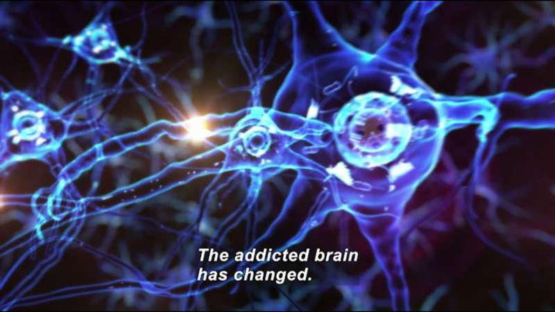 Illustration of neurons and dendrites exchanging signals. Caption: The addicted brain has changed.