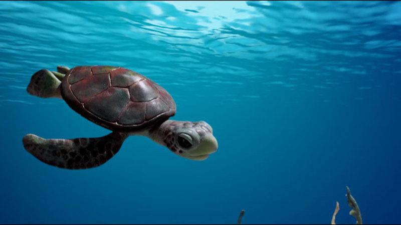 A baby sea turtle swimming in the ocean, descending towards the ocean floor.