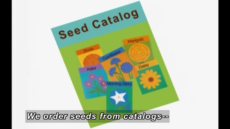 Seed catalog with seed packets of Zinna, Aster, Morning Glory, Cornflower, and Daisy. Caption: We order seeds from catalogs--
