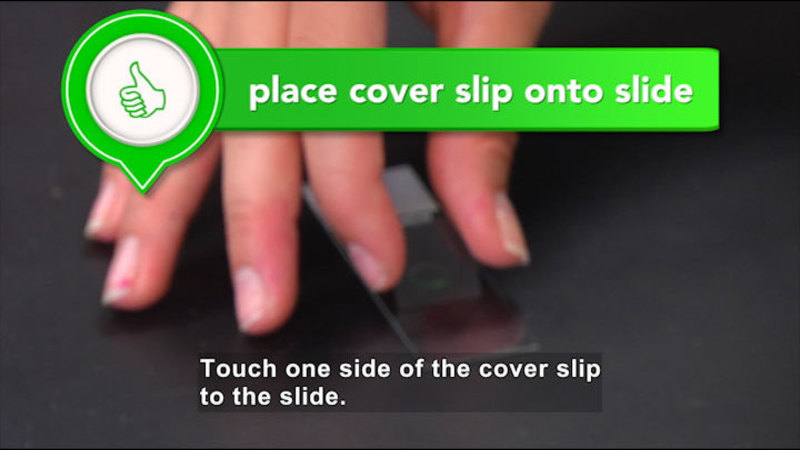 Person placing one edge of a cover slip onto a glass slide. Place cover slip onto slide. Caption: Touch one side of the cover slip to the slide.