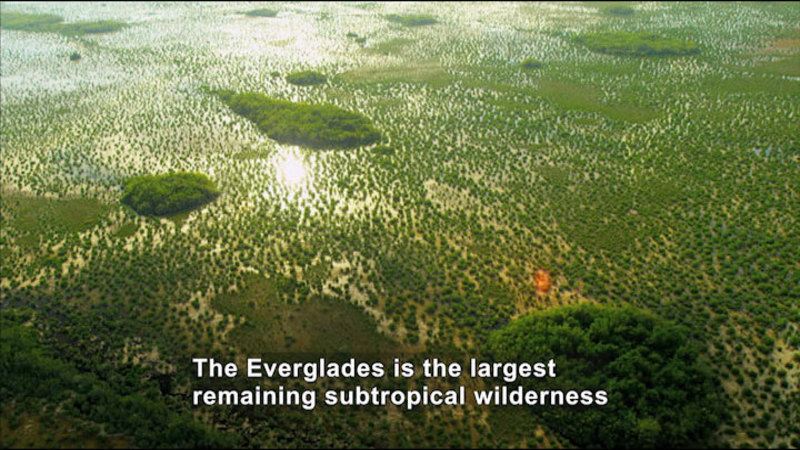 Aerial view of small islands covered in greenery with the water between them dotted in plants. Caption: The Everglades is the largest remaining subtropical wilderness