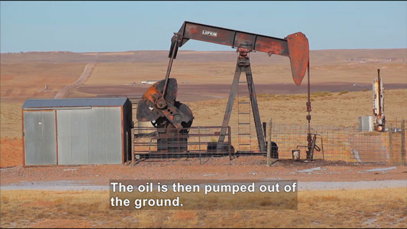 Derrick pumping oil. Caption: The oil is then pumped out of the ground.