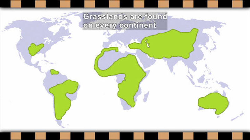 Map of the world with parts highlighted in green. Caption: Grasslands are found on every continent