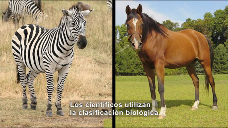 Still image from Science Video Vocab: Family (Spanish)