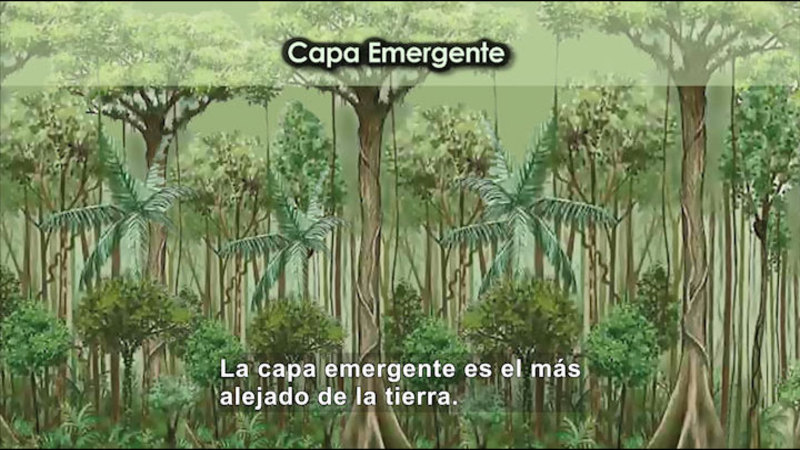 Still image from Science Video Vocab: Tropical Rainforest (Spanish)