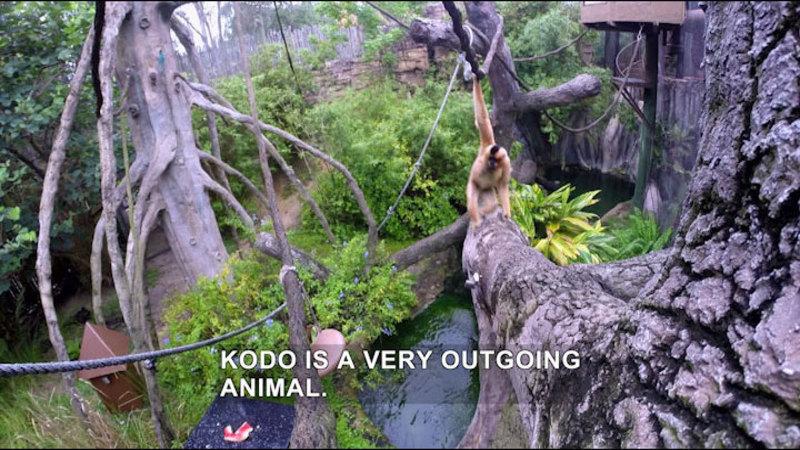 Still image from The Wildlife Docs: Kudos to Kodo & the Penguins